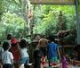 """新加坡亲子互动1线-""""大手拉小手""""新加坡自然生态与英语培训亲子游学营"""
